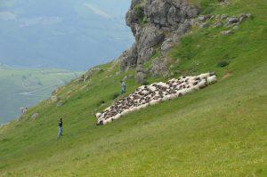 Ossau-Iraty : le territoire de l'Appellation côté basque