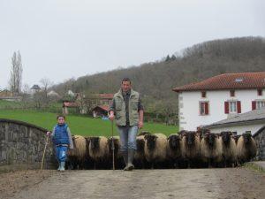 Ossau-Iraty : la famille de producteurs Aozteia